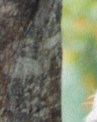 Mary Juanita  Williams