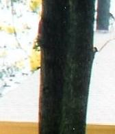 Clara Marie  Moran